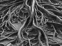Tree Roots - Discovery Engineering: Root Cause Analysis